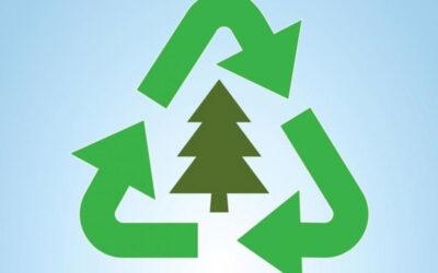 Environnement : Recyclage des sapins de Noël